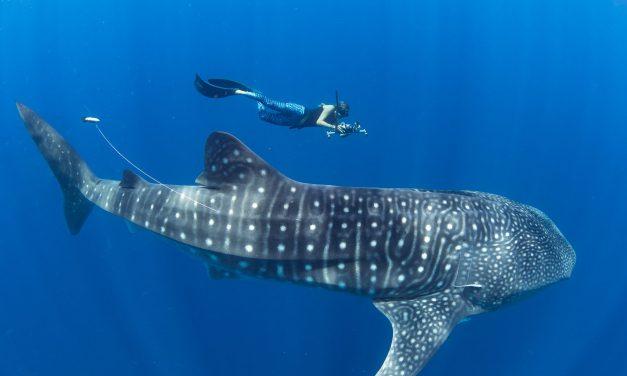 A la découverte de la mégafaune marine de Nosy Be