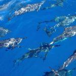 Social distancing for marine mammals!