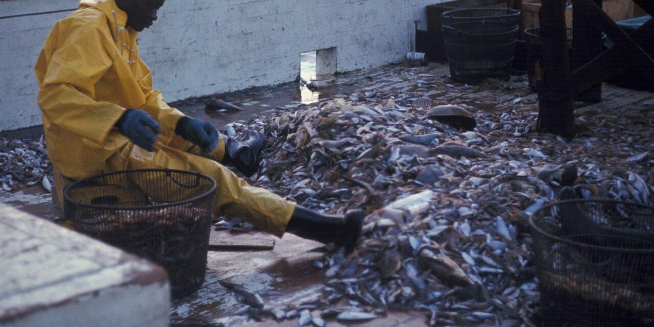 Filière crevette : un « pillage organisé » de la ressource