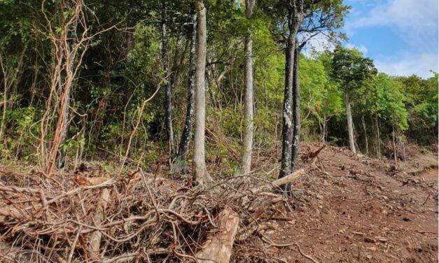 Déforestation massive à Chamarel