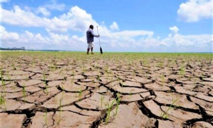 Une assurance pour les agriculteurs victimes de la sécheresse