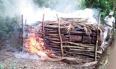 Un réseau de charbon de bois illégal démantelé