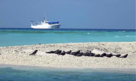 L'archipel des Glorieuses classé réserve naturelle