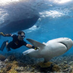 Comment approcher les grands requins en toute sérénité ?