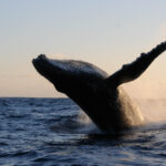 See you on September 30 to save the humpback whales