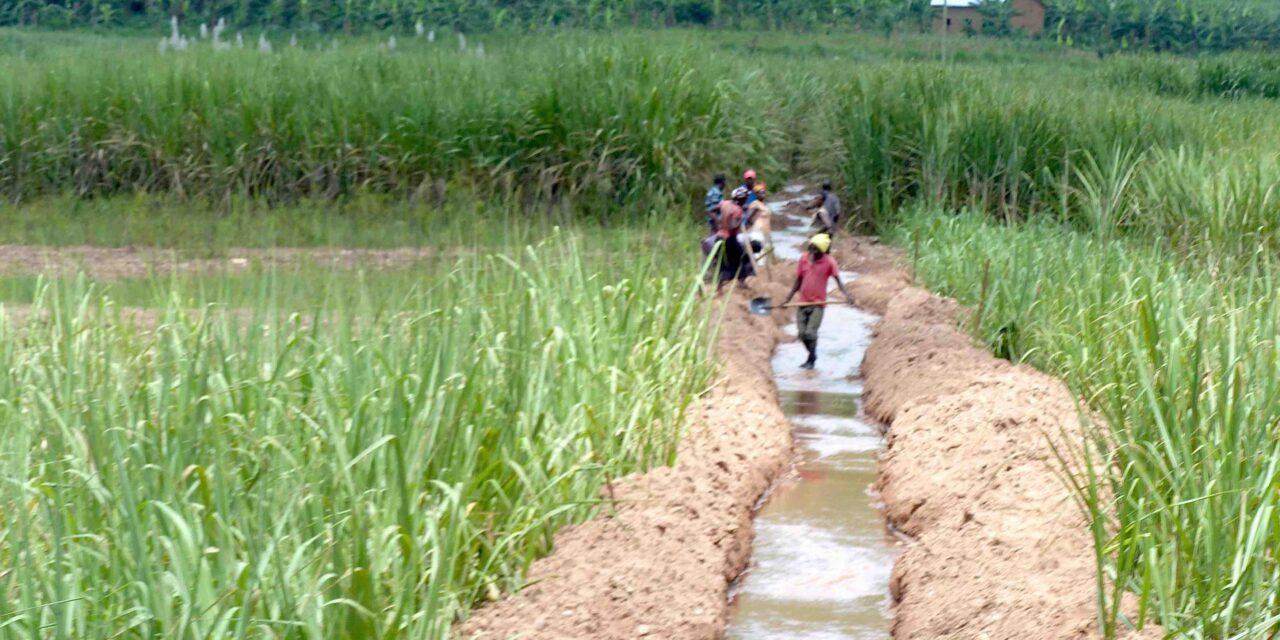 Le Rwanda autonome en semences agricoles