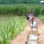 Rwanda self-sufficient in agricultural seeds
