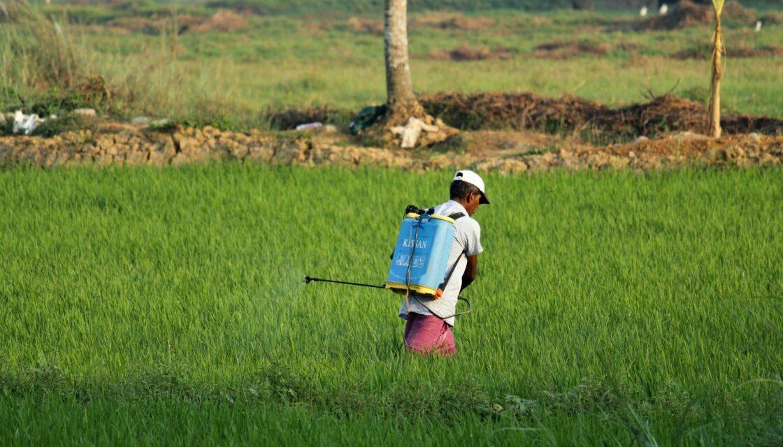 Une étude sur l'utilisation abusive de pesticides à Maurice