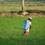 The scourge of pesticides overuse in Mauritius